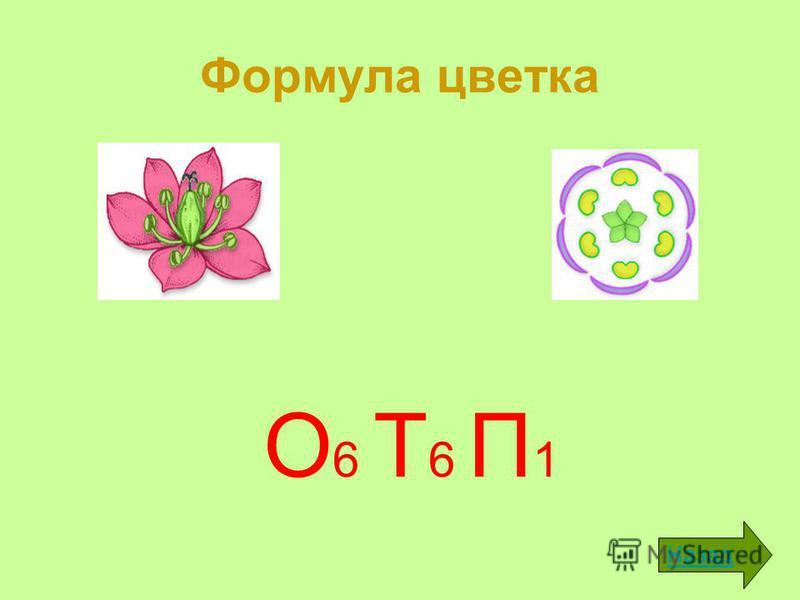 Формула цветка О 6 Т 6 П 1 Назад