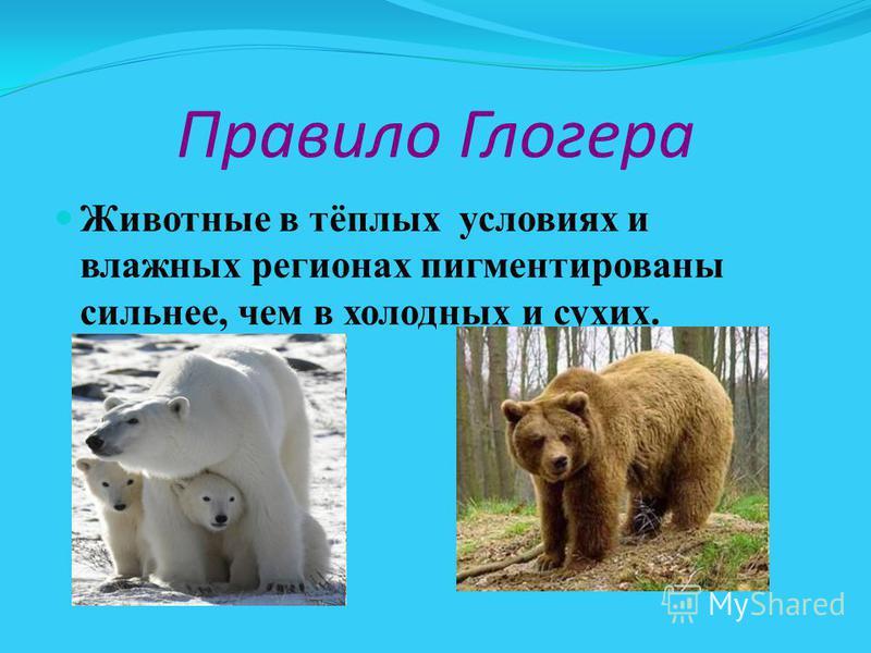 Правило Глогера Животные в тёплых условиях и влажных регионах пигментированы сильнее, чем в холодных и сухих.