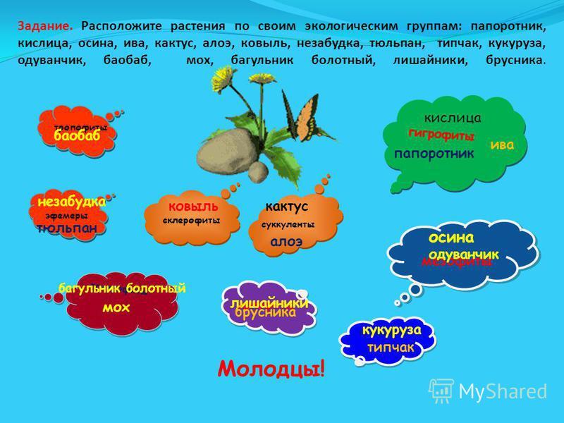 Задание. Расположите растения по своим экологическим группам: папоротник, кислица, осина, ива, кактус, алоэ, ковыль, незабудка, тюльпан, типчак, кукуруза, одуванчик, баобаб, мох, багульник болотный, лишайники, брусника. гигрофиты мезофиты склерофиты