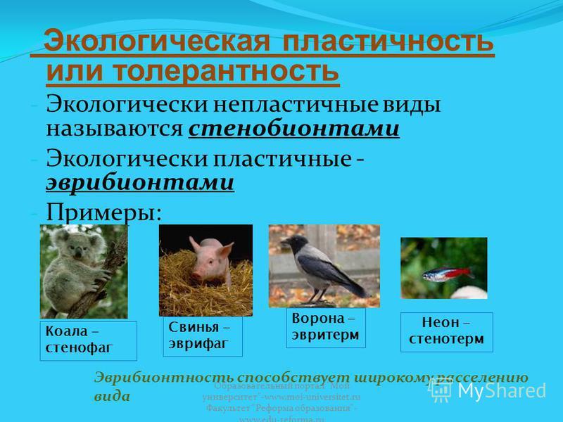 Экологическая пластичность или толерантность - Экологически непластичные виды называются стенобионтами - Экологически пластичные - эврибионтами - Примеры: Коала - стенофаг Свинья - эврифаг Эврибионтность способствует широкому расселению вида Ворона -