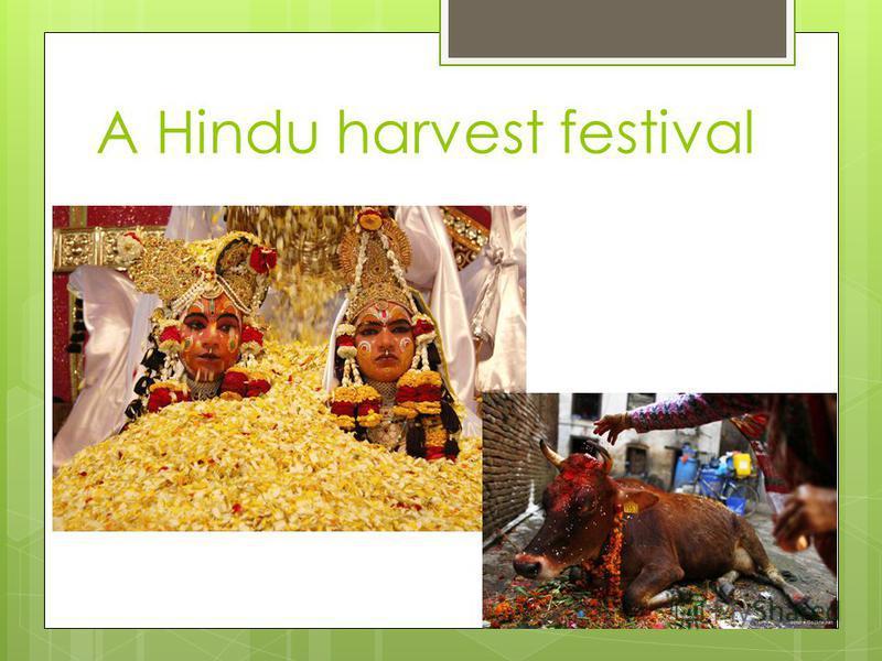 A Hindu harvest festival