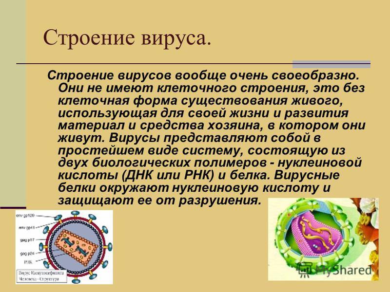 Строение вируса. Строение вирусов вообще очень своеобразно. Они не имеют клеточного строения, это без клеточная форма существования живого, использующая для своей жизни и развития материал и средства хозяина, в котором они живут. Вирусы представляют