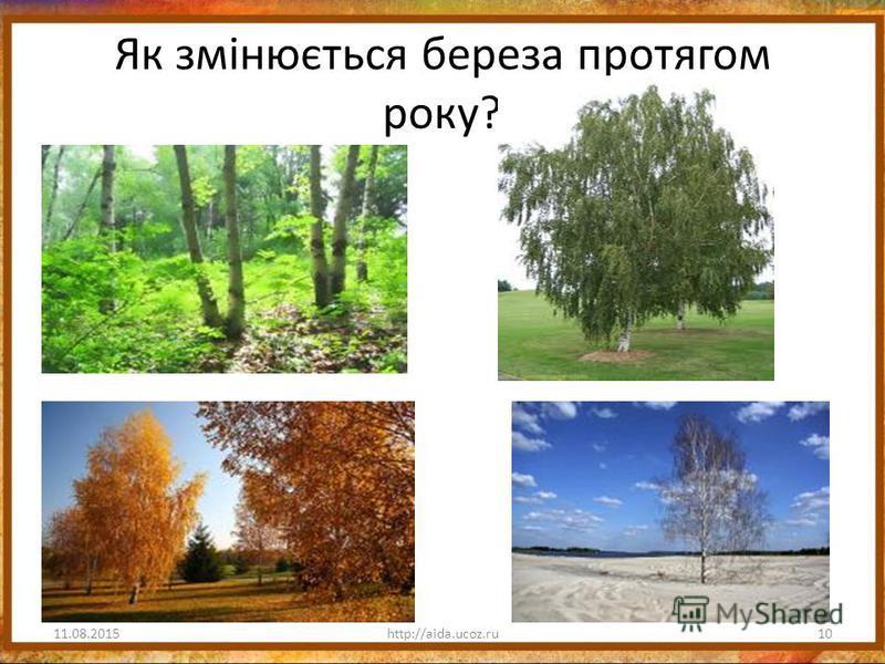 Як змінюється береза протягом року? 11.08.201510http://aida.ucoz.ru