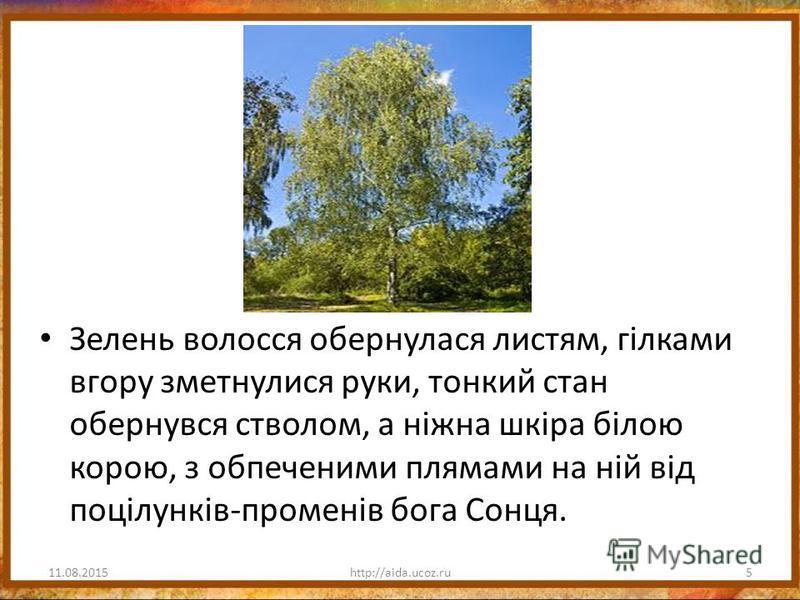 Зелень волосся обернулася листям, гілками вгору зметнулися руки, тонкий стан обернувся стволом, а ніжна шкіра білою корою, з обпеченими плямами на ній від поцілунків-променів бога Сонця. 11.08.20155http://aida.ucoz.ru