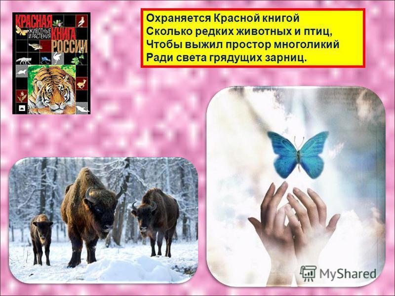 Охраняется Красной книгой Сколько редких животных и птиц, Чтобы выжил простор многоликий Ради света грядущих зарниц.