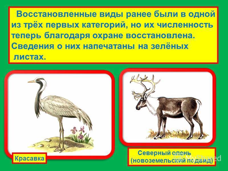Восстановленные виды ранее были в одной из трёх первых категорий, но их численность теперь благодаря охране восстановлена. Сведения о них напечатаны на зелёных листах. Красавка Северный олень (новоземельский подвид)