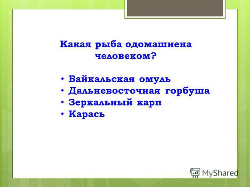 Какая рыба одомашнена человеком? Байкальская омуль Дальневосточная горбуша Зеркальный карп Карась