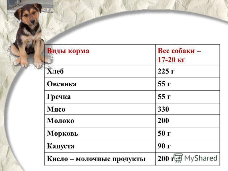 Виды корма Вес собаки – 17-20 кг Хлеб 225 г Овсянка 55 г Гречка 55 г Мясо 330 Молоко 200 Морковь 50 г Капуста 90 г Кисло – молочные продукты 200 г