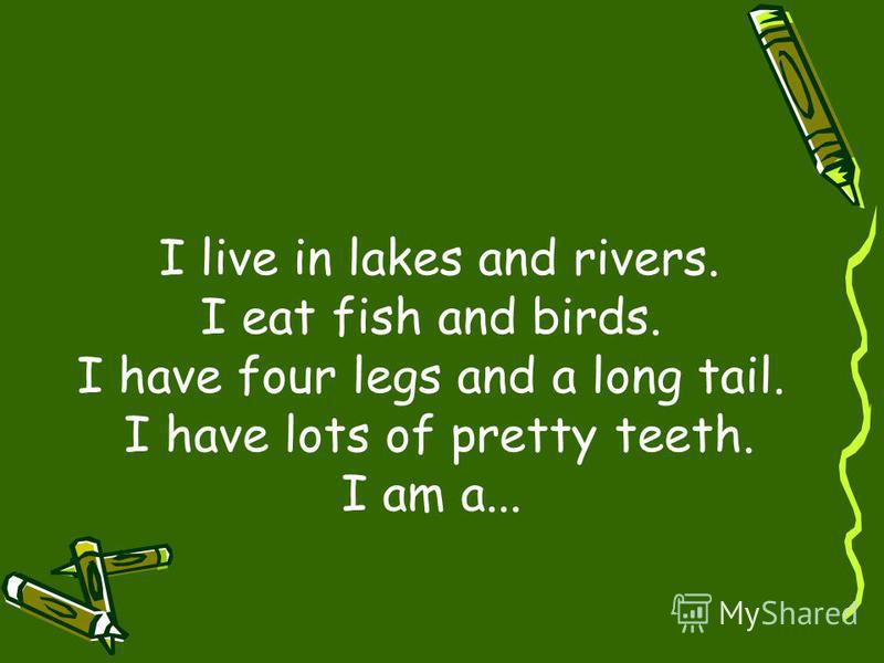 I live in lakes and rivers. I eat fish and birds. I have four legs and a long tail. I have lots of pretty teeth. I am a...