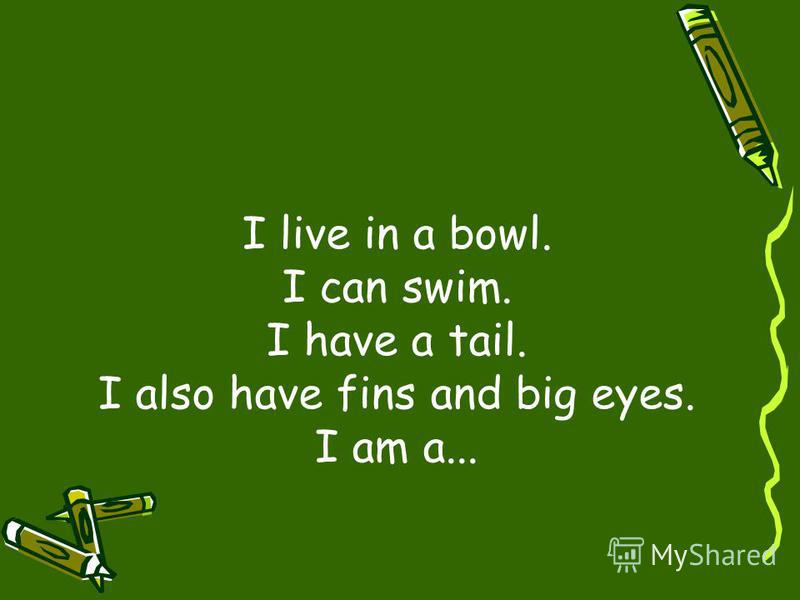 I live in a bowl. I can swim. I have a tail. I also have fins and big eyes. I am a...