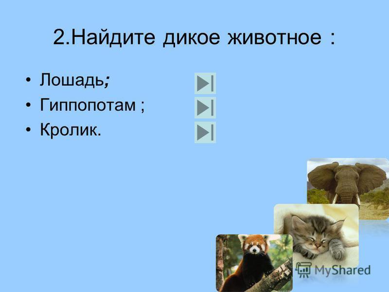 1. Найдите домашнее животное: Коала; Попугай; Медведь; Свинья.