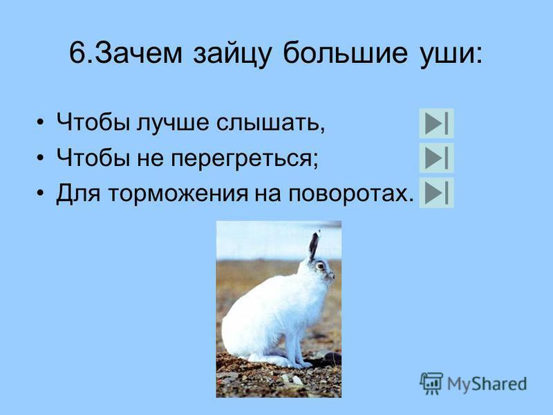 5. Зачем страус голову в песок прячет: От страха, Разыскивает пищу, Освобождается от паразитов.