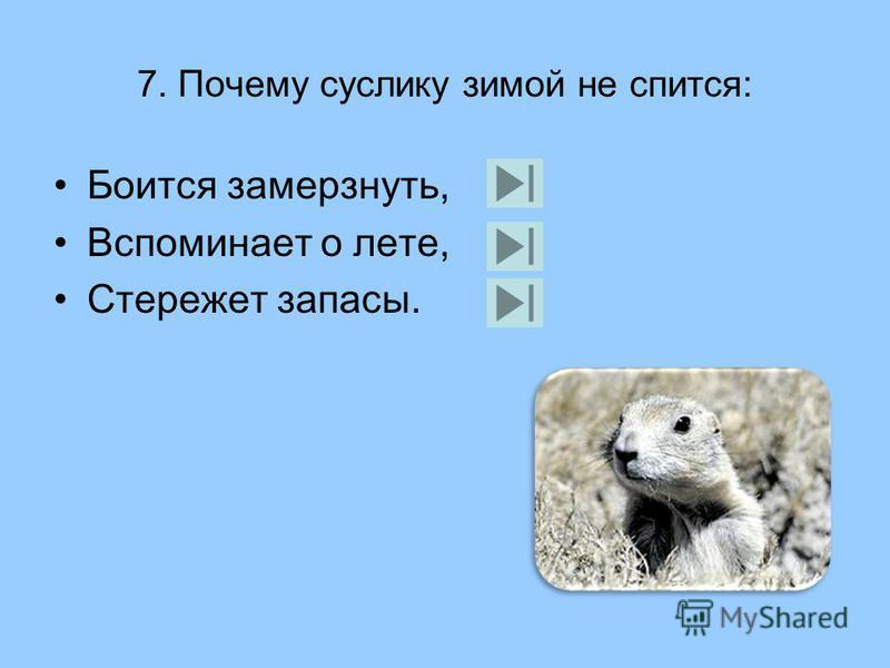 6. Зачем зайцу большие уши: Чтобы лучше слышать, Чтобы не перегреться; Для торможения на поворотах.