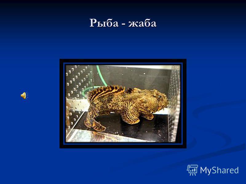 Рыба - жаба