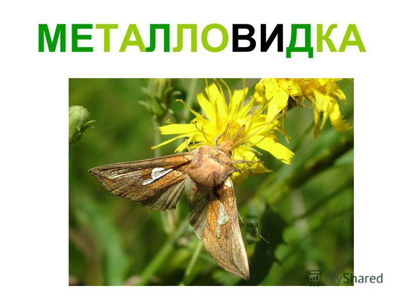 МЕТАЛЛОВИДКА