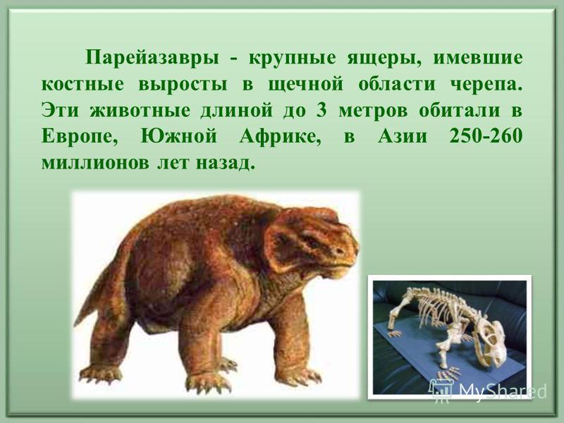 Парейазавры - крупные ящеры, имевшие костные выросты в щечной области черепа. Эти животные длиной до 3 метров обитали в Европе, Южной Африке, в Азии 250-260 миллионов лет назад.