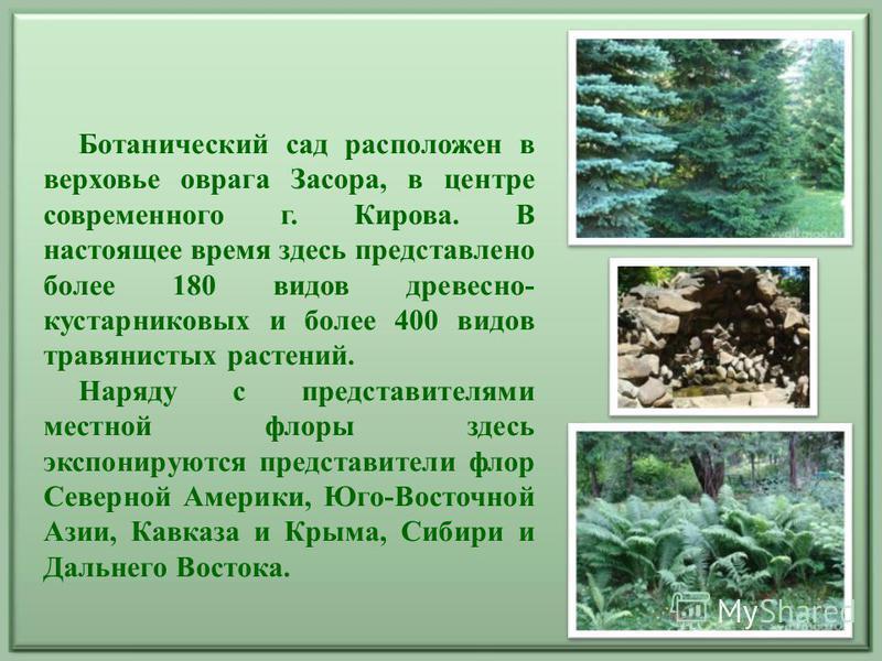 Ботанический сад расположен в верховье оврага Засора, в центре современного г. Кирова. В настоящее время здесь представлено более 180 видов древесно- кустарниковых и более 400 видов травянистых растений. Наряду с представителями местной флоры здесь э