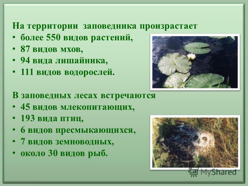 На территории заповедника произрастает более 550 видов растений, 87 видов мхов, 94 вида лишайника, 111 видов водорослей. В заповедных лесах встречаются 45 видов млекопитающих, 193 вида птиц, 6 видов пресмыкающихся, 7 видов земноводных, около 30 видов