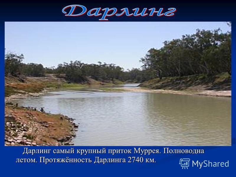 Дарлинг самый крупный приток Муррея. Полноводна летом. Протяжённость Дарлинга 2740 км. Дарлинг самый крупный приток Муррея. Полноводна летом. Протяжённость Дарлинга 2740 км.