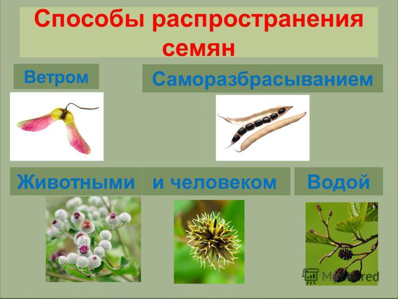 Используя текст на стр. 100-101, запишите способы распространения семян Работа с учебником
