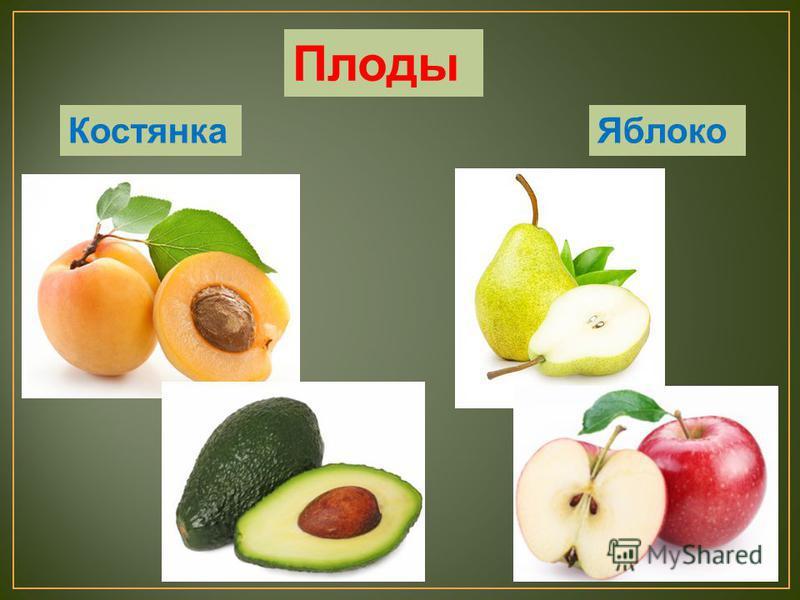Костянка Яблоко Плоды