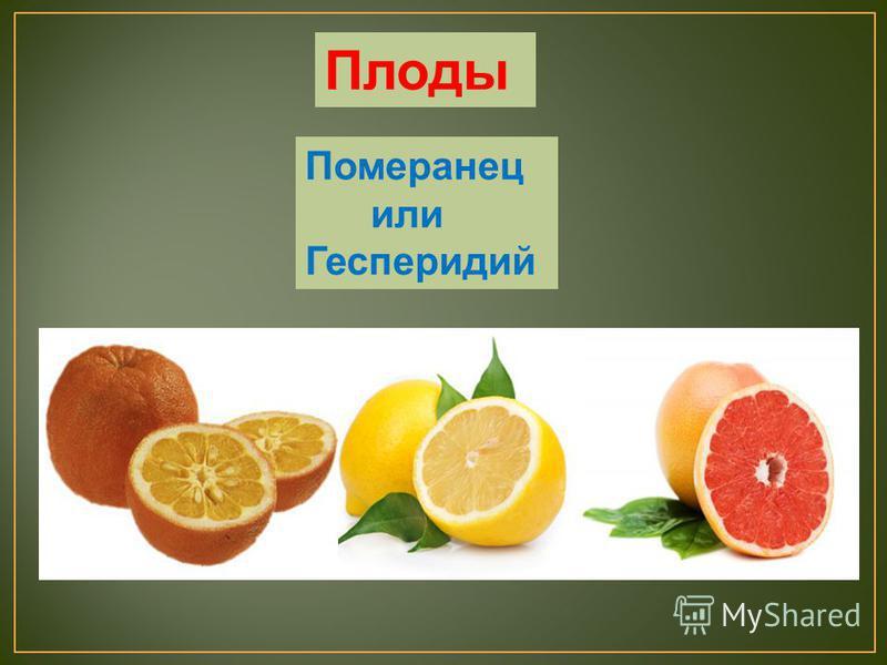 Померанец или Гесперидий Плоды