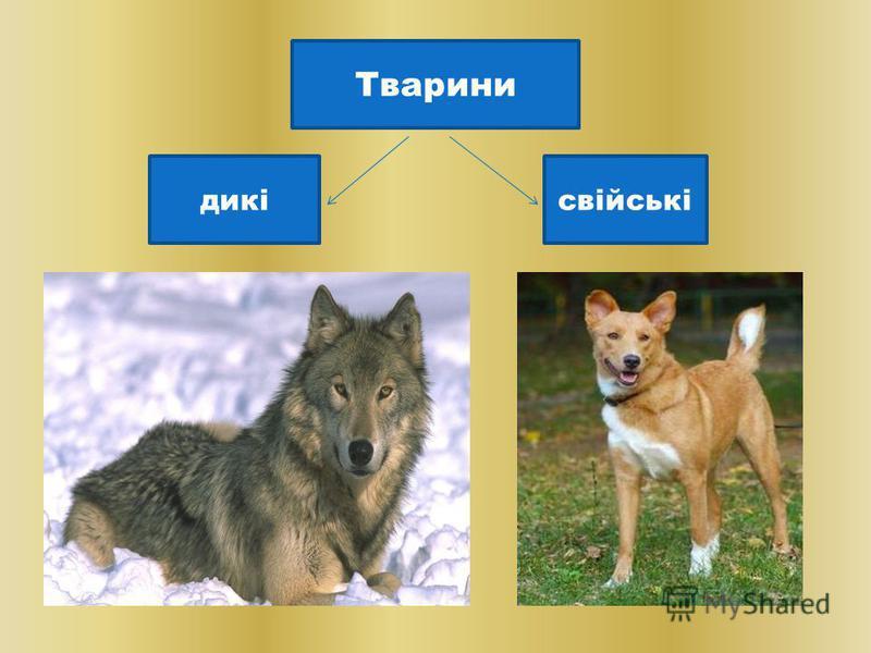 Тварини дикісвійські Тварини