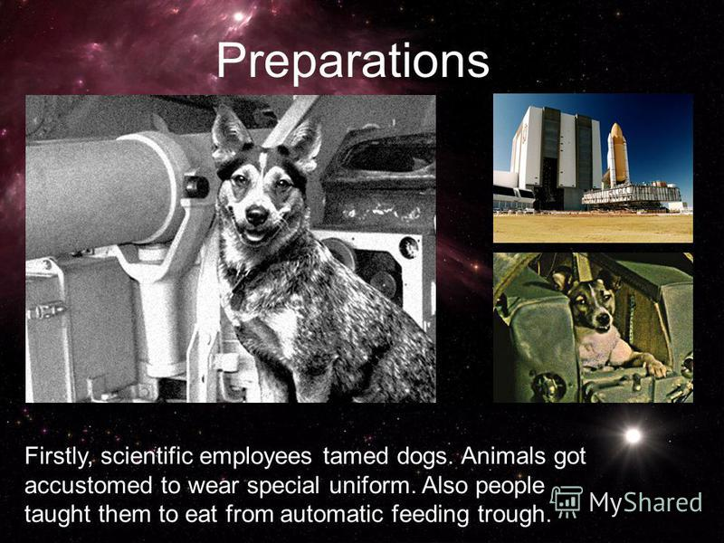 Firstly, scientific employees tamed dogs. Animals got accustomed to wear special uniform. Also people taught them to eat from automatic feeding trough. Preparations