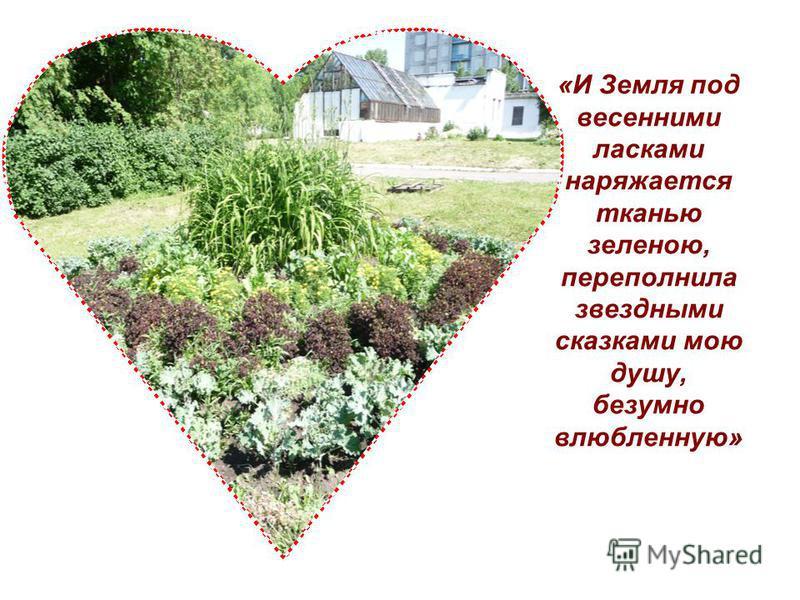 «И Земля под весенними ласками наряжается тканью зеленою, переполнила звездными сказками мою душу, безумно влюбленную»