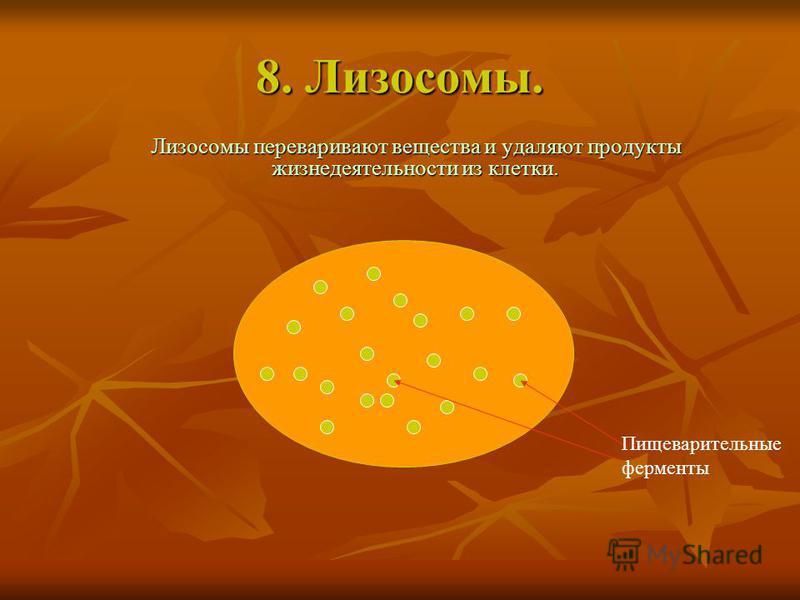 8. Лизосомы. Лизосомы переваривают вещества и удаляют продукты жизнедеятельности из клетки. Пищеварительные ферменты