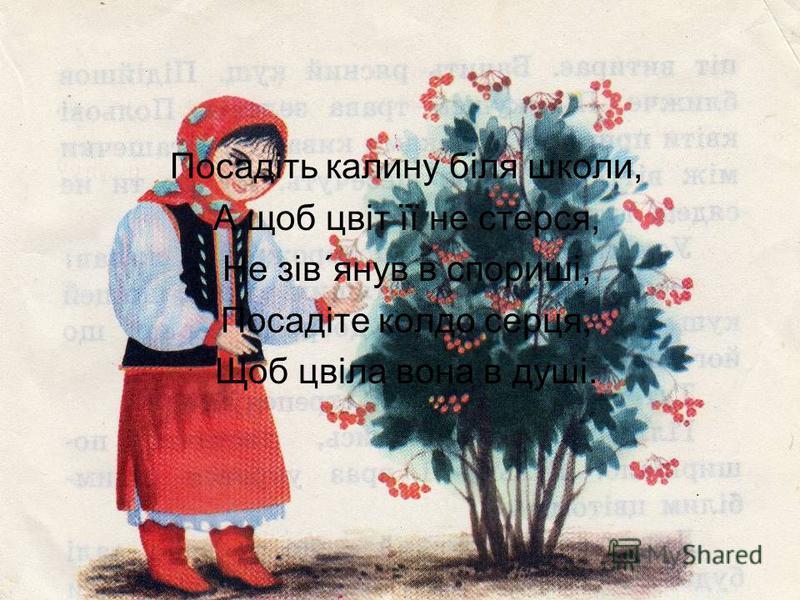 Посадіть калину біля школи, А щоб цвіт її не стерся, Не зів´янув в спориші, Посадіте колдо серця, Щоб цвіла вона в душі.