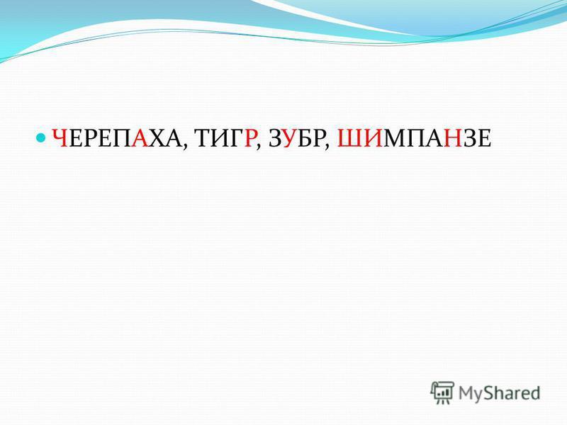 ЧЕРЕПАХА, ТИГР, ЗУБР, ШИМПАНЗЕ