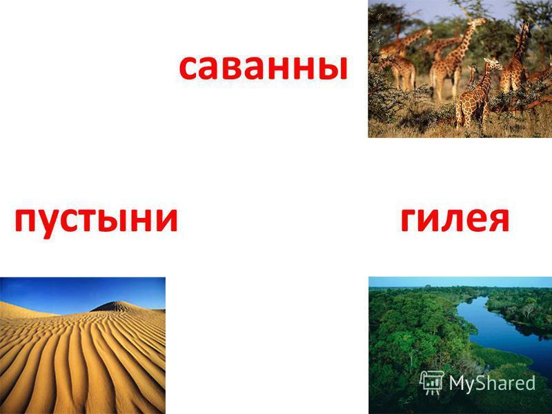 саванны пустыни гилея