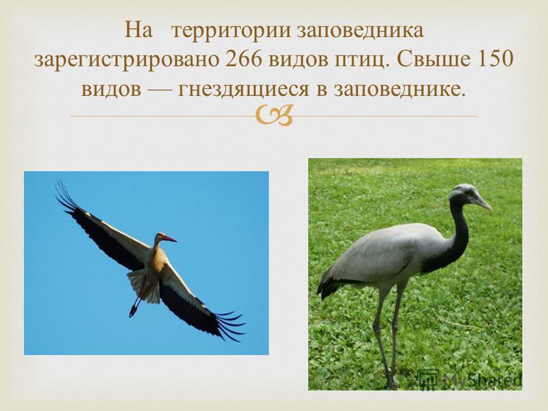 На территории заповедника зарегистрировано 266 видов птиц. Свыше 150 видов гнездящиеся в заповеднике.
