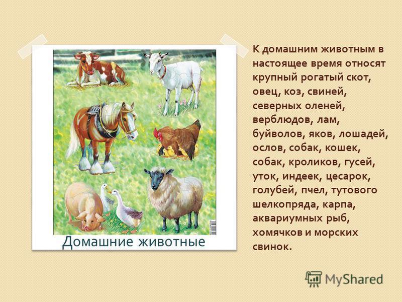 К домашним животным в настоящее время относят крупный рогатый скот, овец, коз, свиней, северных оленей, верблюдов, лам, буйволов, яков, лошадей, ослов, собак, кошек, собак, кроликов, гусей, уток, индеек, цесарок, голубей, пчел, тутового шелкопряда, к