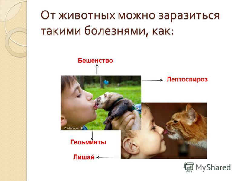 От животных можно заразиться такими болезнями, как :