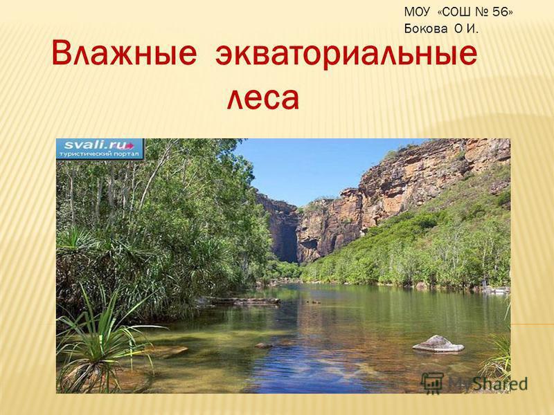 Влажные экваториальные леса МОУ «СОШ 56» Бокова О И.