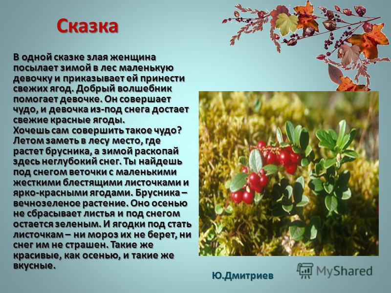 Сказка В одной сказке злая женщина посылает зимой в лес маленькую девочку и приказывает ей принести свежих ягод. Добрый волшебник помогает девочке. Он совершает чудо, и девочка из-под снега достает свежие красные ягоды. Хочешь сам совершить такое чуд