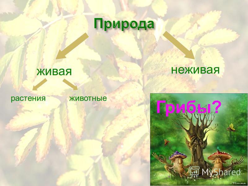 Микология – наука о грибах (от греческого слова микоз - гриб) В давние времена одни ученые считали, что грибы – дьявольские существа, порожденные нечистыми силами. Другие считали, что грибы божественного происхождения.