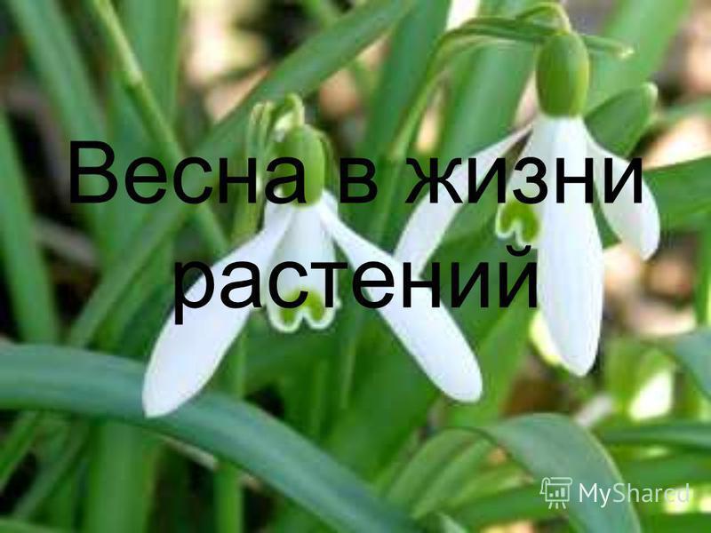 Весна в жизни растений