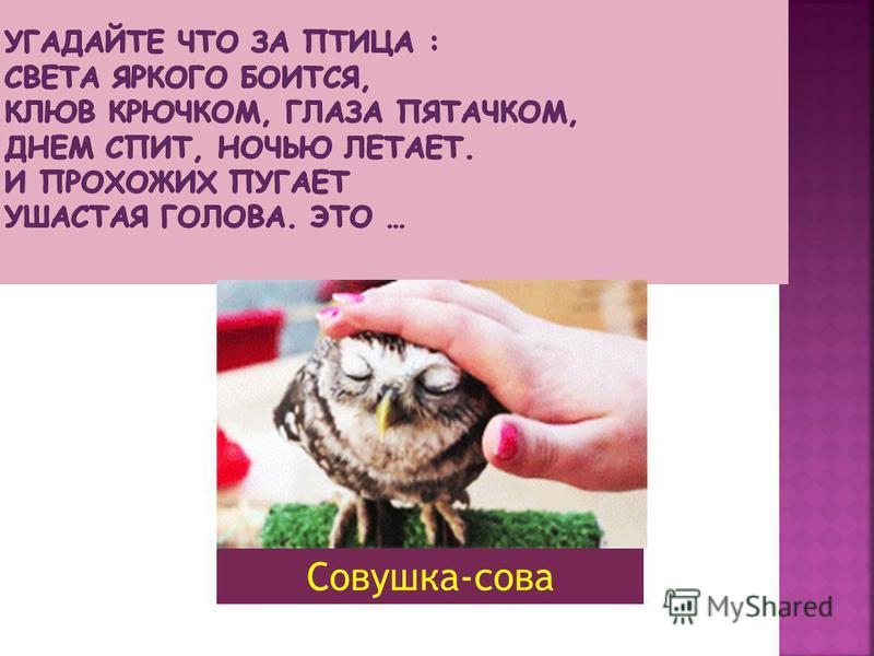 Совушка-сова