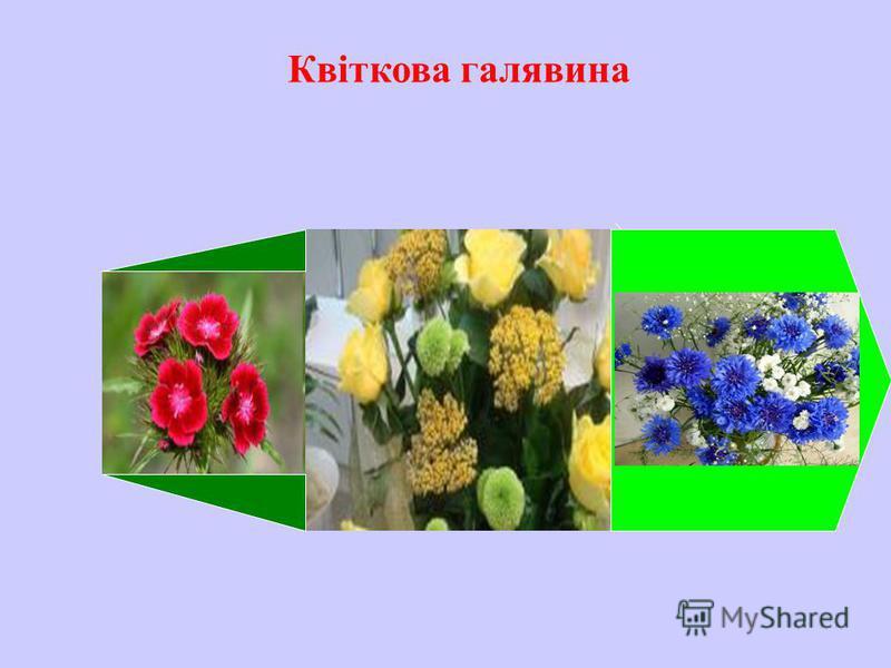 Квіткова галявина