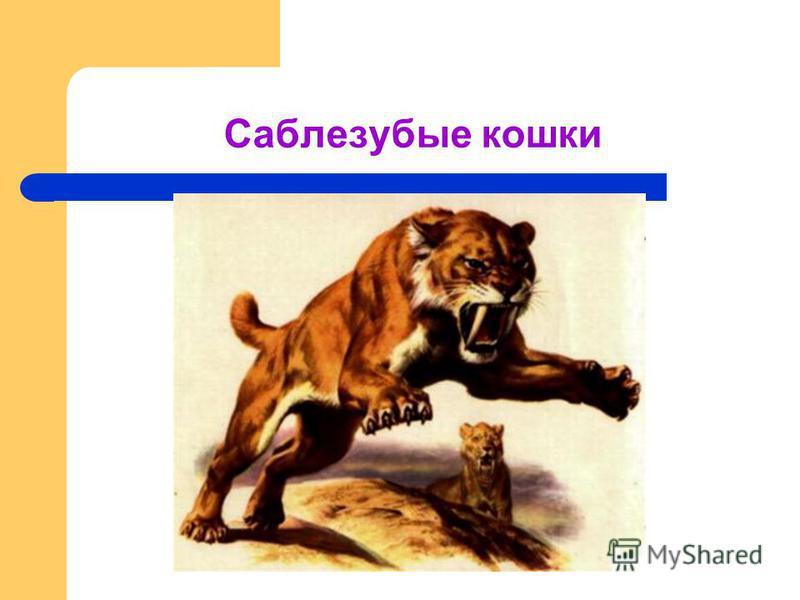 Саблезубые кошки