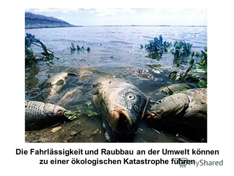 Die Fahrlässigkeit und Raubbau an der Umwelt können zu einer ökologischen Katastrophe führen