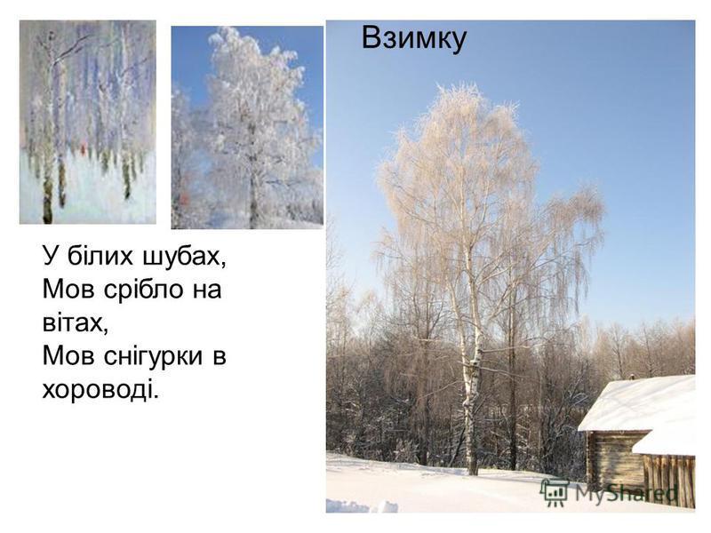 У білих шубах, Мов срібло на вітах, Мов снігурки в хороводі. Взимку