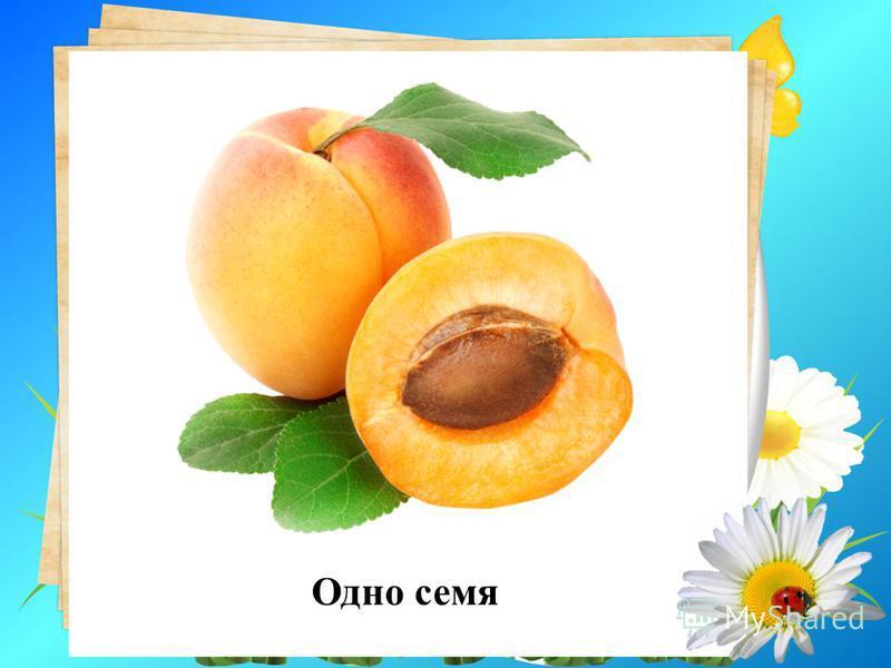 9. Сколько семян в плоде абрикоса? Одно семя