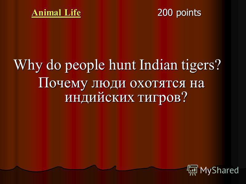 Animal Life Animal Life 200 points Why do people hunt Indian tigers? Почему люди охотятся на индийских тигров?