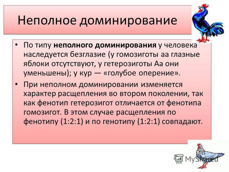 Неполное доминирование По типу неполного доминирования у человека наследуется безглазые (у гомозиготы а глазные яблоки отсутствуют, у гетерозиготы Аа они уменьшены); у кур «голубое оперение». При неполном доминировании изменяется характер расщепления