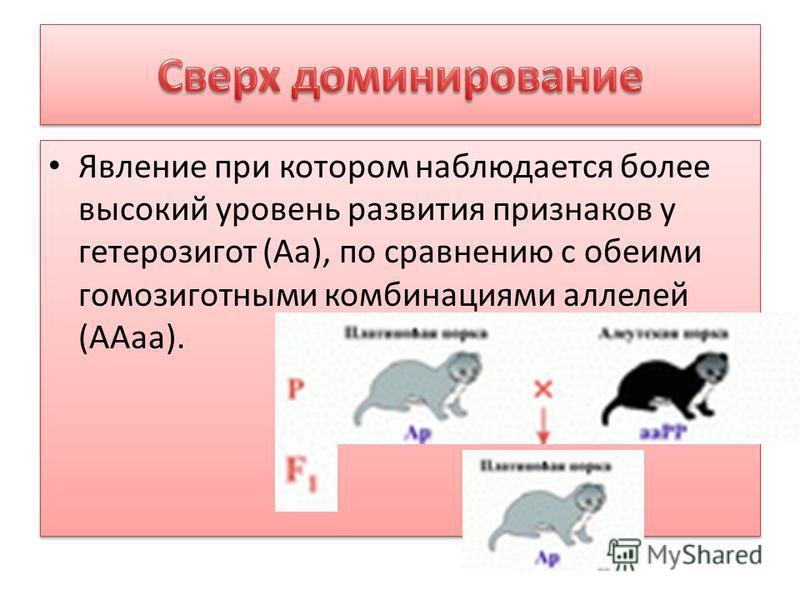 Явление при котором наблюдается более высокий уровень развития признаков у гетерозигот (Аа), по сравнению с обеими гомозиготными комбинациями аллелей (ААа).