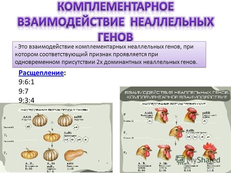 - Это взаимодействие комплементарных неаллельных генов, при котором соответствующий признак проявляется при одновременном присутствии 2 х доминантных неаллельных генов. Расщепление Расщепление: 9:6:1 9:7 9:3:4